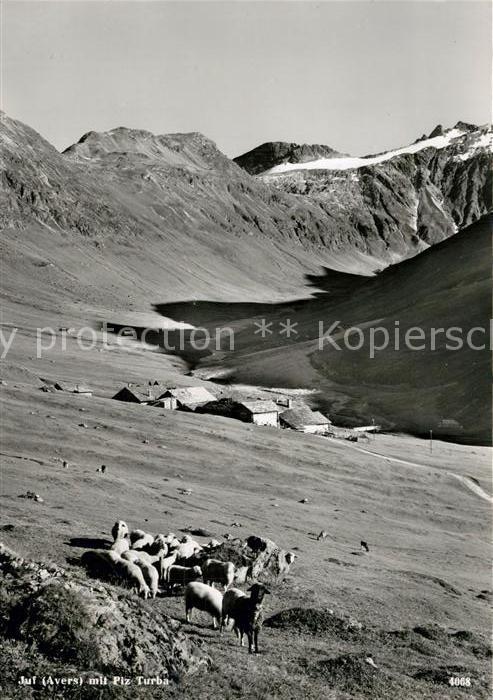 AK / Ansichtskarte Juf_Avers Schafe mit Piz Turba Juf_Avers 0