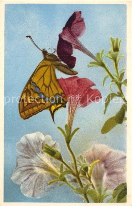 Ak Ansichtskarte Schmetterlinge Blumen Schmetterlinge Nr Kp46388