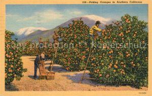 AK / Ansichtskarte Orangen_Oranges Picking Oranges Southern California  Orangen Oranges