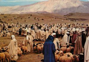 AK / Ansichtskarte Maroc_Marokko Typique Marche aux bestiaux Viehmarkt Maroc Marokko