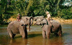 AK / Ansichtskarte Elefant Kandy Sri Lanka Elefant