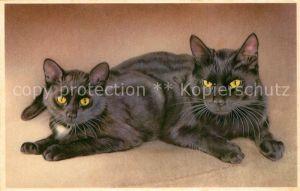 AK / Ansichtskarte Katzen  Katzen