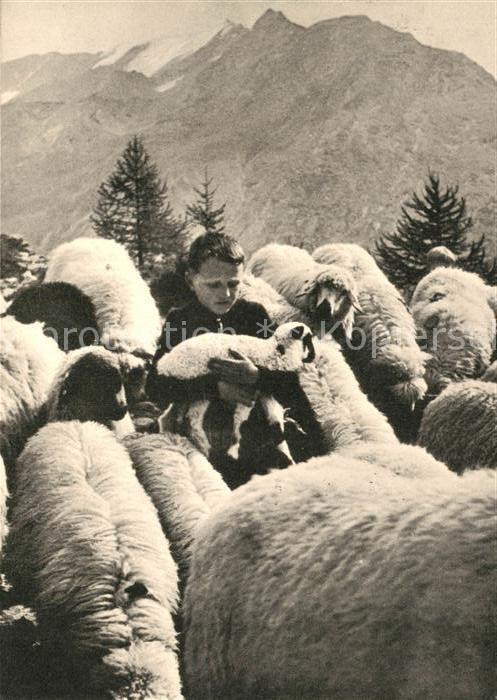 AK / Ansichtskarte Schafe Hirtenbub Schafe