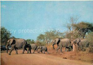 AK / Ansichtskarte Elefant Elefantenfamilie Suedafrika  Elefant