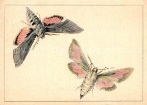 AK / Ansichtskarte Schmetterlinge Fledermausfalter Zeichnung Pia Roshardt  Schmetterlinge
