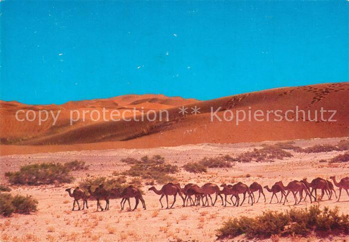 AK / Ansichtskarte Infini_Marokko Camele Caravanne Infini Marokko