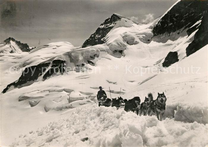 AK / Ansichtskarte Jungfraujoch Schlittenhunde Gletscherhorn Jungfraujoch