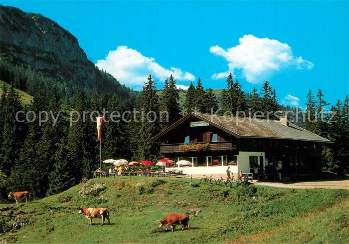 AK / Ansichtskarte Thiersee Berggasthof Ackernalm Almvieh Kuehe Alpen Thiersee