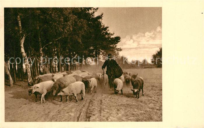 AK / Ansichtskarte Schafe Schaefer