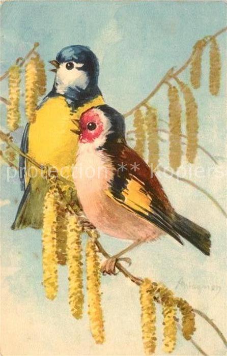 AK / Ansichtskarte Voegel Blaumeise Rotkehlchen Kuenstlerkarte