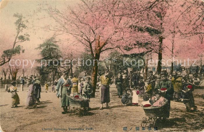 AK / Ansichtskarte Yokohama Cherry Blossom Yokohama Park Yokohama