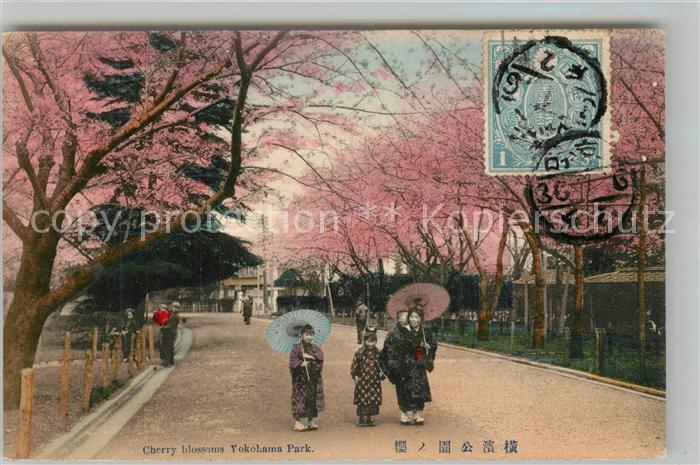 AK / Ansichtskarte Yokohama Cherry Blossoms Yokohama Park Yokohama