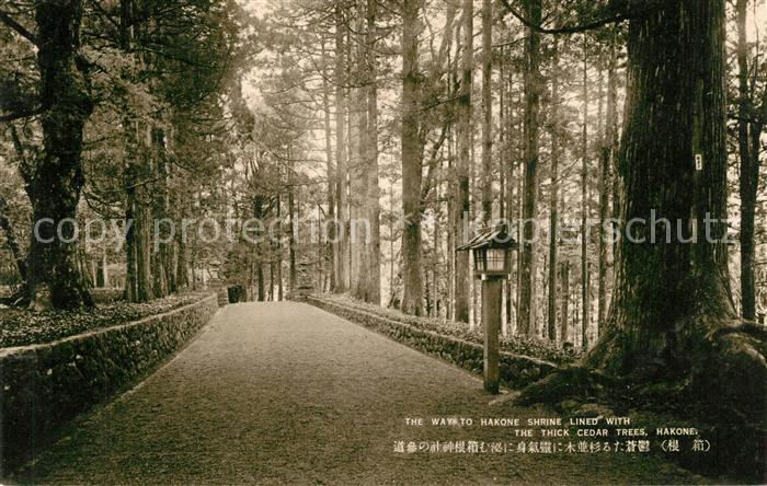 AK / Ansichtskarte Hakone Way to Hakone Shrine thick cedar trees Hakone