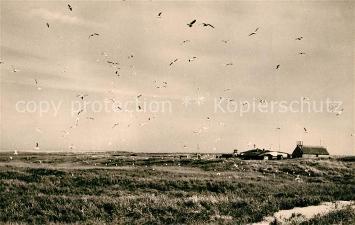 AK / Ansichtskarte Insel_Juist Vogelinsel Memmert Insel_Juist 0