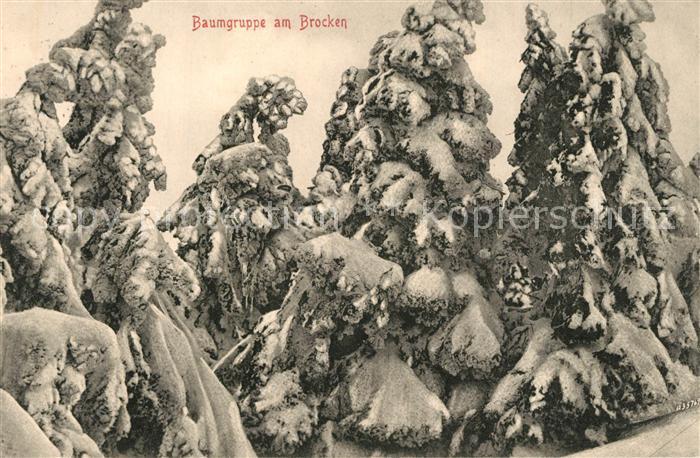 AK / Ansichtskarte Brocken_Harz Verschneite Baumgruppe Brocken Harz 0