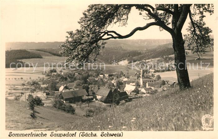 AK / Ansichtskarte Saupsdorf Panorama Saupsdorf