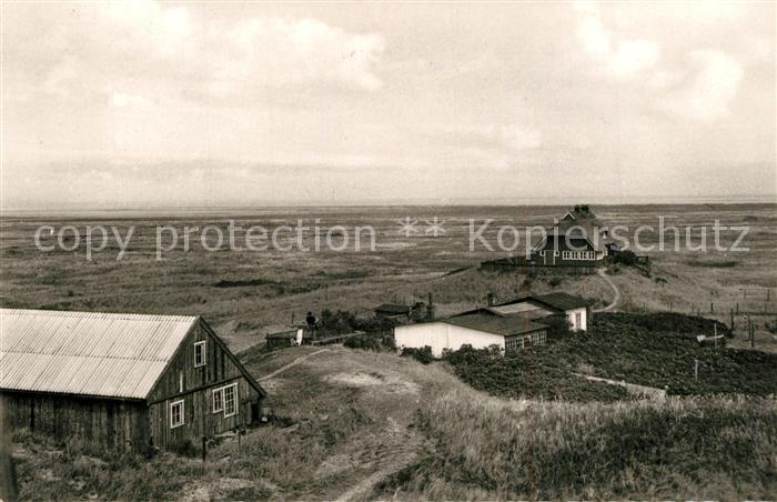 AK / Ansichtskarte Insel_Juist Nordsee Vogelinsel Memmert Insel_Juist