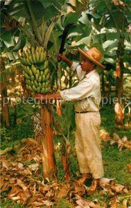 AK / Ansichtskarte Bananen Martinique Banana Tree