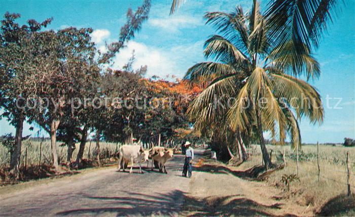 Lajas Carretera desde Lajas a Boqueron Lajas