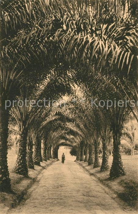 Talagouga Allee de palmiers