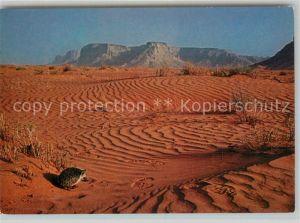 AK / Ansichtskarte Riyadh Desert Hedgehog Riyadh