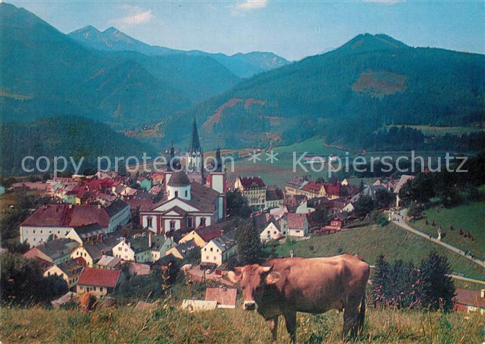 AK / Ansichtskarte Mariazell_Steiermark Kirche Kuh Panorama Mariazell_Steiermark