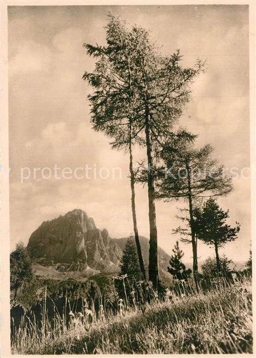 AK / Ansichtskarte Dolomiten_Langkofel Il Sassolungo Landschaftspanorama Dolomiten_Langkofel
