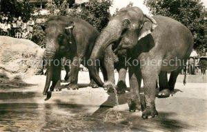 AK / Ansichtskarte Elefant Zoo Basel Indische Elefanten