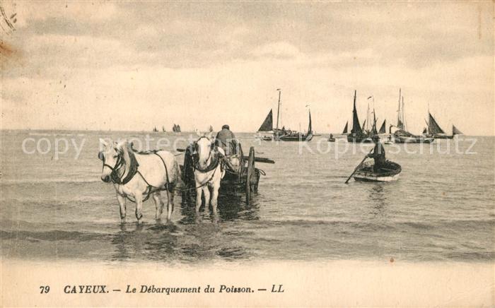 AK / Ansichtskarte Cayeux sur Mer Le Debarquement du Poisson Cayeux sur Mer