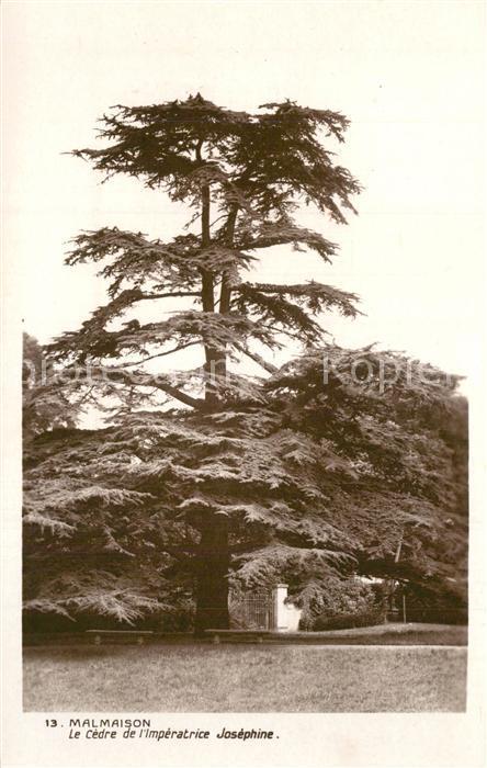 AK / Ansichtskarte Malmaison_Rueil Le Cedre de Imperatrice Josephine Malmaison Rueil
