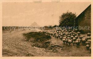 AK / Ansichtskarte Mont Saint Michel Les celebres moutons de pre sale Mont Saint Michel