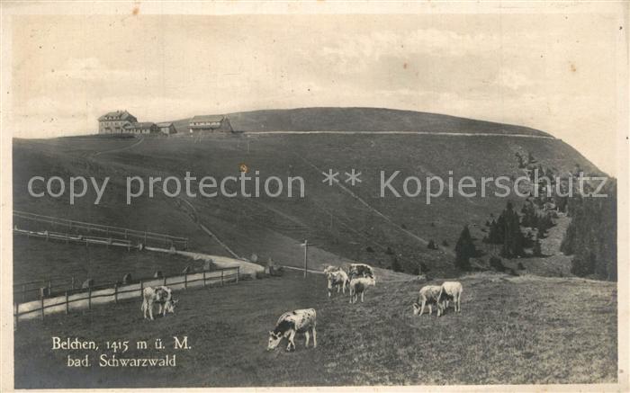 AK / Ansichtskarte Belchen_Baden Viehweiden Kuehe Berggasthof Schwarzwald Belchen_Baden 0