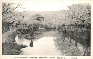 AK / Ansichtskarte Nagasaki Cherry Blossoms at Nakagawa Karurusu Nagasaki