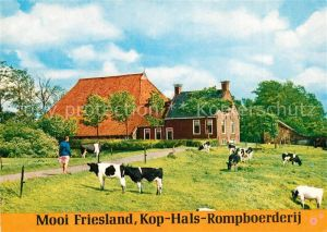 AK / Ansichtskarte Kop_Hals_Rompboerderij Friesisches Bauernhaus Viehweide Kuehe