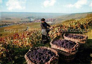 AK / Ansichtskarte Ernte_Landwirtschaft Vendanges sur les Coteaux Weinlese