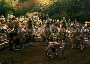 AK / Ansichtskarte Elefant Zoo Basel Vorf?hrung Afrikanischer Elefanten