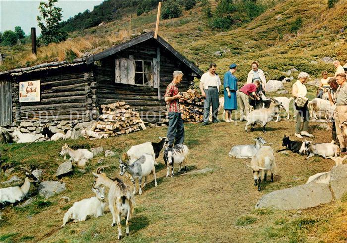 Ziege Norge Fra geitestolen Goats Out Farm