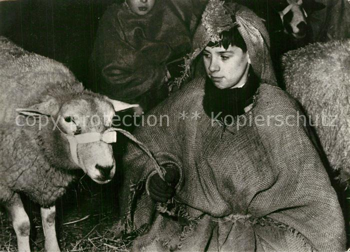 Schafe Imelda Tehuis Arnheim Kerstfeest