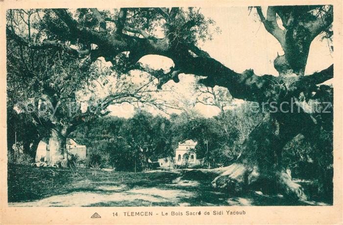 Tlemcen Le Bois Sacre de Sidi Yacoub Tlemcen
