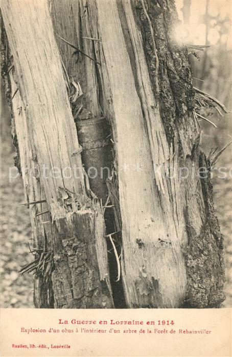 Rehainviller Explosion d'un obus a l'interieur d'un arbre de la Foret Rehainviller