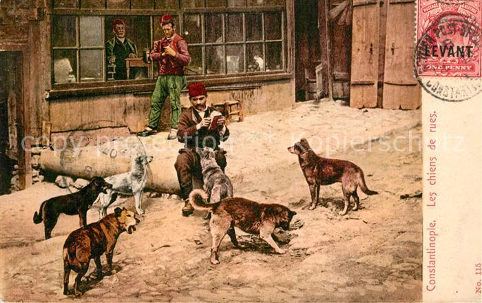 AK / Ansichtskarte Constantinopel_Istanbul Les chiens de rues Hunde  Constantinopel_Istanbul