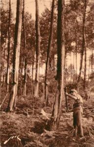 AK / Ansichtskarte Forstwirtschaft Les Landes Saignee de l Arbre d Or  Forstwirtschaft