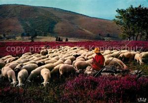 AK / Ansichtskarte Schafe Les Monedieres