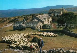 AK / Ansichtskarte Schafe Paturage France