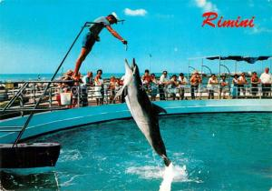 AK / Ansichtskarte Rimini Aquarium Delphin Show Rimini