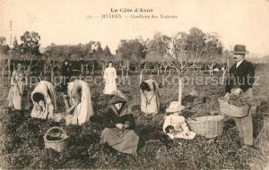 AK / Ansichtskarte Hyeres_les_Palmiers Cueillette des Violettes Hyeres_les_Palmiers