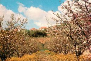 AK / Ansichtskarte Beyrouth Fruits of Lebanon Baumbluete Beyrouth