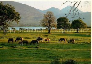 AK / Ansichtskarte Killarney_Kerry Landscape Horses Mountains Killarney_Kerry