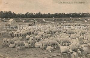 AK / Ansichtskarte Mouthiers sur Boeme Parc a moutons Mouthiers sur Boeme
