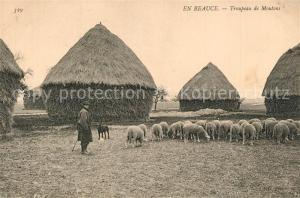 AK / Ansichtskarte Clevilliers Troupeau de moutons Clevilliers